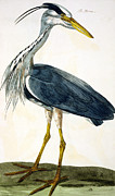 The Bird Posters -  The Heron  Poster by Peter Paillou