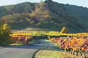 Grapes Paintings -  The Hills of Clos La Chance Winery by Author and Photographer Laura Wrede
