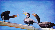 Cormorants Prints -  The Mediation Print by Fraida Gutovich