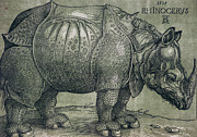 Wild Animal Drawings Prints -  The Rhinoceros Print by Albrecht Durer