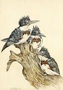 Alfred Ng -  three kingfishers