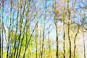 Tree Reflections Abstract Print by Natalie Kinnear