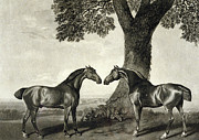 Horses Drawings Prints -  Two Hunters  Print by GT Stubbs