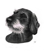 Wire Drawings Prints -  Waldi Wire Haired Dachshund Print by George Horsey