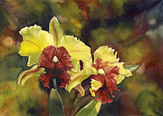 Orchid Art Paintings -  yellow and red Cattleya Orchids by Alfred Ng