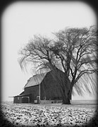 020213-67   Prairie Winter II Print by Mike Davis - Micks Pix Photos
