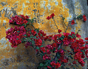 Lawrence Costales - 028 Mission Bougainvillea