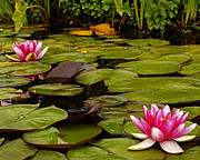 Lawrence Costales - 059 Two Water Lily...