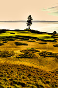 Us Open Framed Prints - #15 at Chambers Bay Golf Course - Location of the 2015 U.S. Open Tournament Framed Print by David Patterson