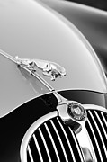 1960 Photos - 1960 Jaguar Mk II 2.4-liter Saloon Grille Emblem - Hood Ornament by Jill Reger