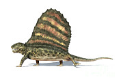 One Animal Digital Art - 3d Rendering Of A Dimetrodon Dinosaur by Leonello Calvetti
