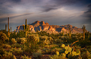 The Supes Photos - A Beautiful Desert Evening  by Saija  Lehtonen