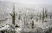 A Desert Snow Day  Print by Saija  Lehtonen