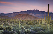 Southwest Landscape Metal Prints - A Desert Sunset  Metal Print by Saija  Lehtonen