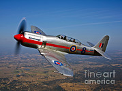 Vintage Air Planes Posters - A Hawker Sea Fury T.mk.20 Dreadnought Poster by Scott Germain