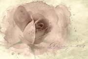 Name Digital Art Prints - A Rose By Any Other Name Print by Betty LaRue