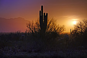 The Superstitions Prints - A Sonoran Morning  Print by Saija  Lehtonen