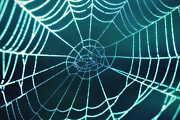 HJBH Photography - A spiders web