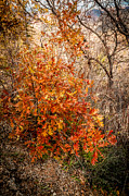 A Touch Of Autumn Print by Bob and Nancy Kendrick