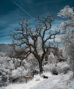 Infrared Photos - A Trail Not Taken by Zygmund Zee