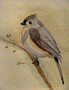 Titmouse Paintings - A Tufted Titmouse by Angela Davies