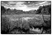 Ponds Art - Adirondack Pond by David Patterson
