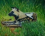 African Wild Dog Print by Caroline Street