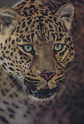 Leopard Pastels Posters - After dark all cats are leopards Poster by Karie-ann Cooper