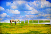 Kentucky Horse Park Photo Prints - Alone Print by Darren Fisher