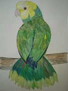 Amazon Parrot Paintings - Amazon Parrot by Nami ODonnell