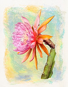 Robert Jensen Art - American Sweetheart Epiphyllum Bloom by Robert Jensen