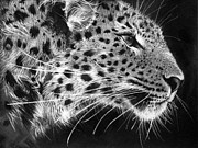 Black Leopard Prints - Amur Leopard Print by Sharlena Wood