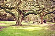 Scott Pellegrin - Ancient Oaks