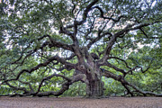 South Framed Prints - Angel Oak Framed Print by Dustin K Ryan