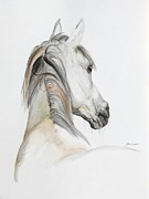 Horse Drawings - Ansata El Naseri by Janina  Suuronen