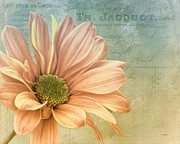 Soft Colors Posters - Antique Daisy Poster by Janice Austin
