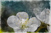 Photomanipulation Photo Prints - Apple Blossom Photoart VI Print by Debbie Portwood