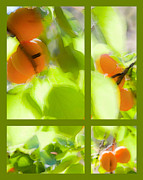 Apricots Posters - Apricot Summer Poster by Theresa Tahara