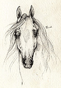 Horse Drawings - Arabian Horse Drawing 13 08 2013 by Angel  Tarantella