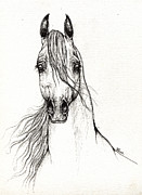 Horse Drawing Prints - Arabian Horse Drawing 28 08 2013 Print by Angel  Tarantella
