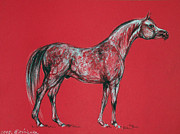 Arab Horses Prints - Arabian Horse Drawing Print by Angel  Tarantella