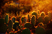 Susanne Van Hulst Prints - Arizona Cactus Print by Susanne Van Hulst