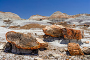 Cottonwood Digital Art - Arizona Petrified Forest National Park by Nadine and Bob Johnston