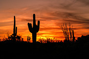 Saguaro Cactus Prints - Arizona Saguaro Cactus Sunset Print by Michael J Bauer