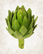 Dinner Paintings - Artichoke Isolated on White by Danny Smythe