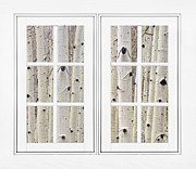 James BO  Insogna - Aspen Forest White Picture Window Frame View