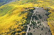 Mountain Road Framed Prints - Aspen Near La Veta Pass, Sangre De Framed Print by John Wark