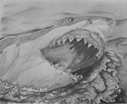 Shark Drawings - Attack by Raquel Ventura