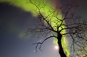 Bare Trees Prints - Aurora Borealis With Tree And Pleiades Print by Joseph Bradley