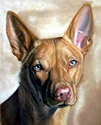 Kelpie Painting Prints - Australian Kelpie Dog Portrait Print by Olde Time  Mercantile
